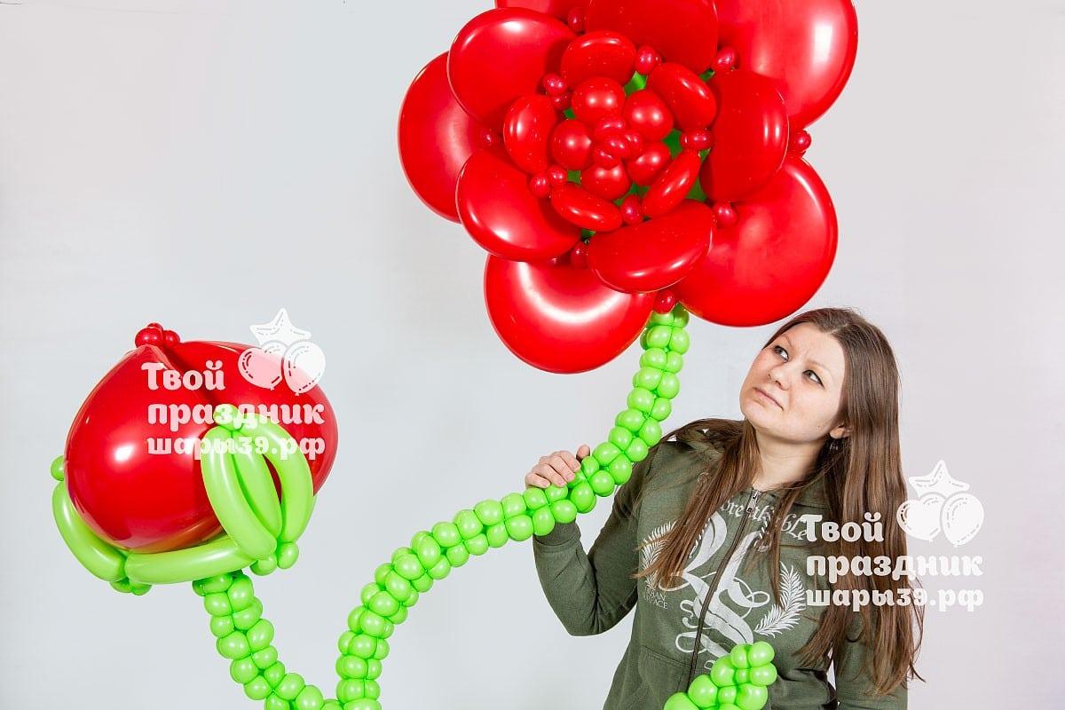 Большой цветок на каркасе! Оформление праздника, фотозона в Калининграде! Шары39.рф, Звоните нам 52-01-67